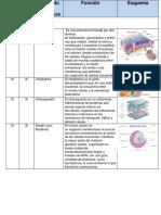 Celulas (biologia contemporanea)