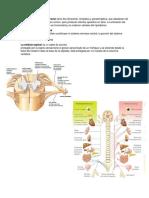 exposicion sistema nervioso.docx