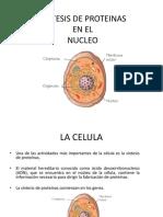 sintesisdeproteinasenelnucleooriginal-140212211211-phpapp01