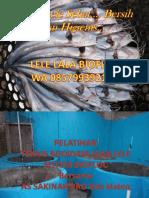 Presentasi Lele Biofloc Assakinah.pptx