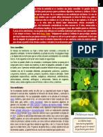 botanica - Chelidonium majus.pdf