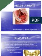 80996852 Anatomia Pelvis