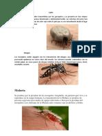 Enfermedades Causadas Por Insectos