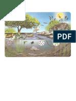 ambiente acuatico