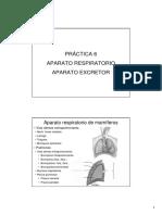 06 Guía Pract Respiratorio Excretor