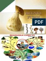 Ciuperci&Lichenii