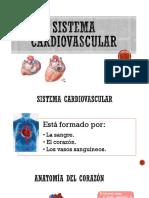 (4) Sistema Cardiovascular