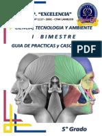 Modulo de Guias y Practicas Anatomia Primer Bimestre