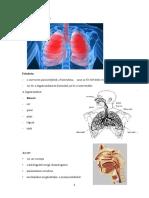 Pneumonologia - A Legzorendszer Anatomiaja