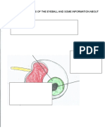 Eyeball Labelling