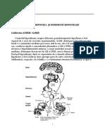 Hipofiza Si Hormonii Hipofizari