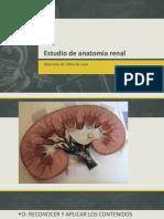 Estudio de anatomía renal.pptx