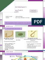 HELMINTOLOGI Strongyloides Stercoralis Dan Ancylostoma Duodenale