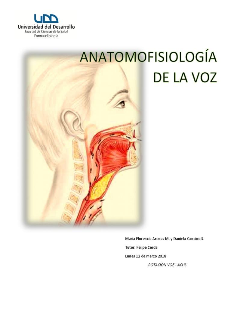 Excelente Anatomía Del Tracto Vocal Bosquejo - Anatomía y Fisiología ...