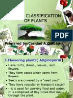 Major Classification of Plants