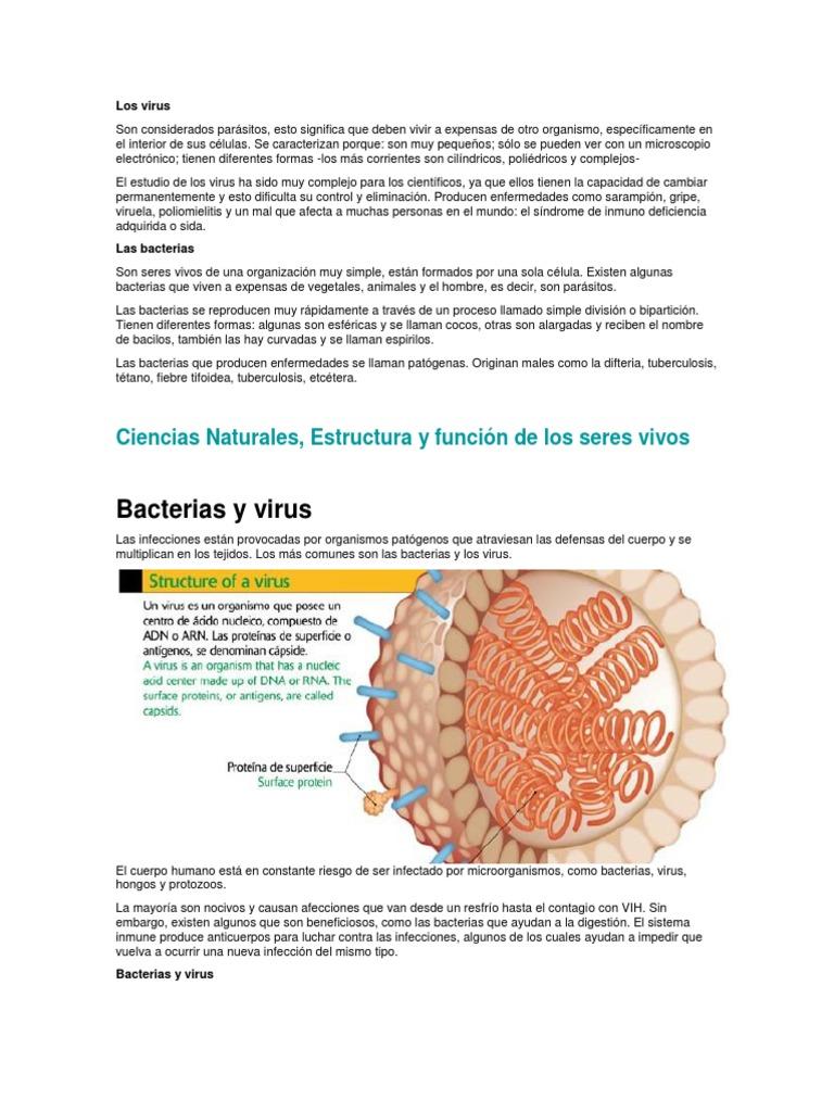 enfermedades mas comunes que causan los virus