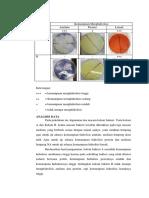 2. Hasil Dan Analisis Data Metabolisme Bakteri