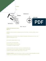 61543732-ELABORACION-ARTESANAL-DE-VINOS.docx