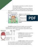 LOS DIENTES.doc