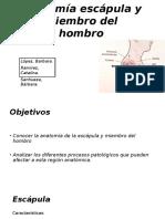Anatomía Escápula y Miembro Del Hombro Ppt (1)