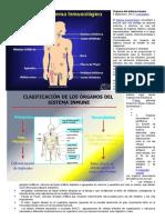 Órganos Del Sistema Inmune