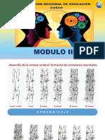 1_PARTE_3_GIMNACIA_CEREBRAL (1).pdf