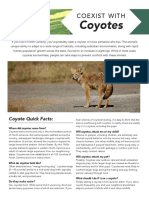 TIPS | How to Coexist With Coyotes