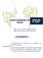 5d_gametogenesis