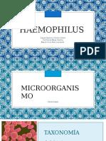Haemophilus-2