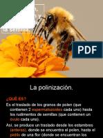 Biología Polinizacion Fecundacion y Formación de La Semilla