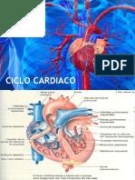 Ciclo Cardiaco FisioH