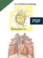 Heart Blood Histo