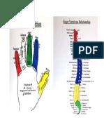 Dedos y La Columna Vertebral