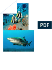 Animales de Mar