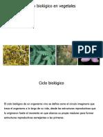 Ciclo_biologico_2016.pdf