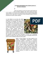 Importancia de Los Microorganismos en El Reciclaje de La Materia Organica