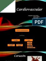Anatomía Cardiovascular2 Nuevo