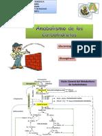 Anabolismo de los carbohidratos.pdf