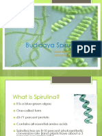 Budidaya Spirulina