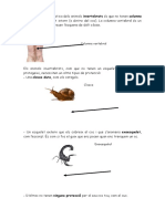 228409043-Dossier-Invertebrats.doc