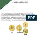 18-Citoplasma y herencia.pdf