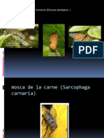 Muestrario de Entomologia