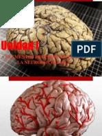 265907168 La Biopsicologia y Otras Disciplinas de La Neurociencia