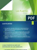 Las Plantas Jd