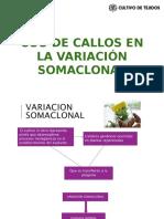 Usos de Callos en La Variación Somaclonal