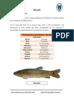 Peces y Su Taxonomía