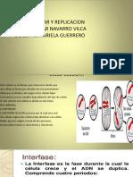 Ciclo Celular y Replicacion