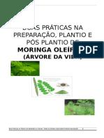 Boas Práticas Na Preparação, Plantio e Pós Plantio de Moringa Oleífera v.3