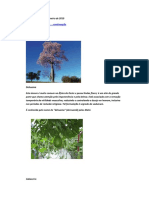 84507373-Arvores-e-Ervas-Sagradas.pdf