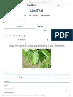 ข่าต้น สรรพคุณและประโยชน์ของต้นข่าต้น 13 ข้อ ! (เทพทาโร)